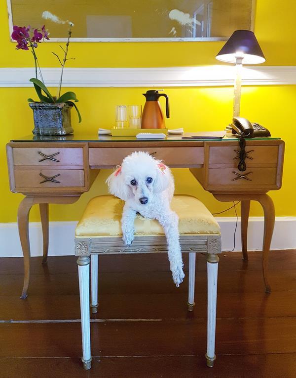 suite yellow by dussol joatinga