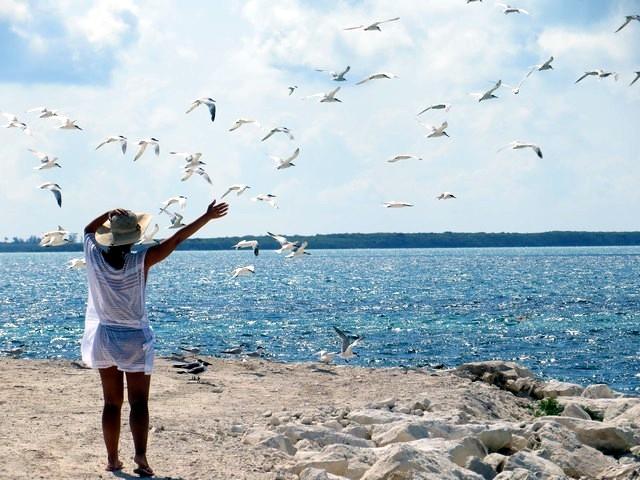 mar azul e pássaros voando em cococay