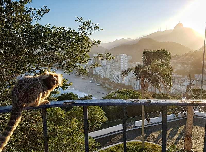 mico e a praia do leme