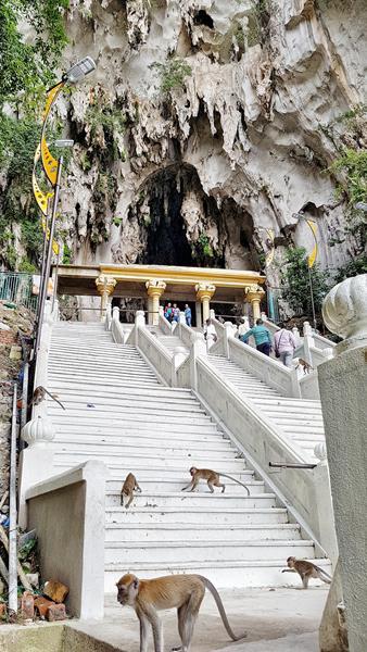 macacos da batu caves