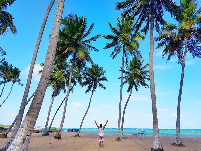 praia com muitos coqueiros