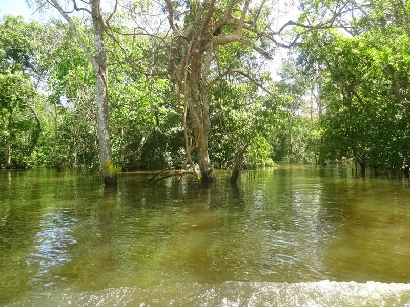 floresta inundada de manaus