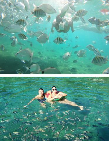 Peixes-na-lagoa-verde
