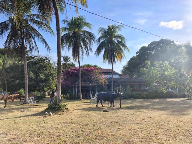 Fazenda Mironga Marajo