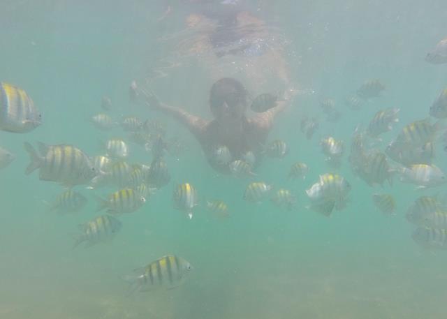 Peixinhos na pajuçara