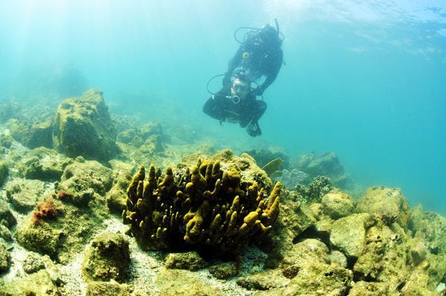 Mergulho de cilindro em Arraial do Cabo