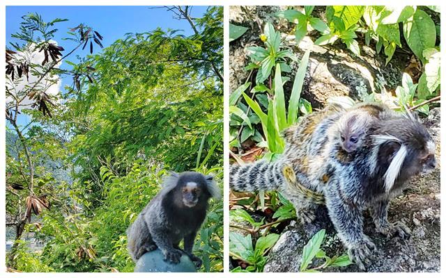 micos parque da catacumba