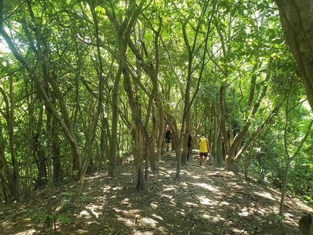 trilha fechada do parque da catacumba