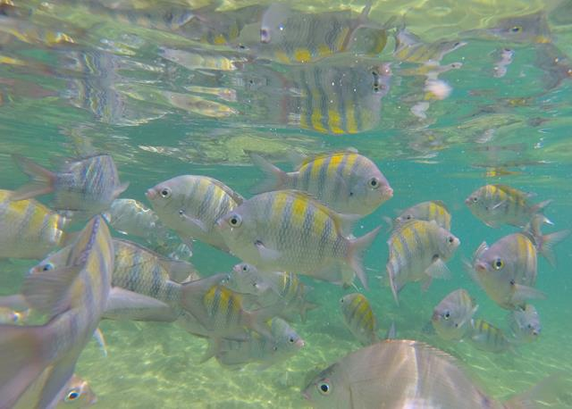 Peixinhos da lagoa Verde
