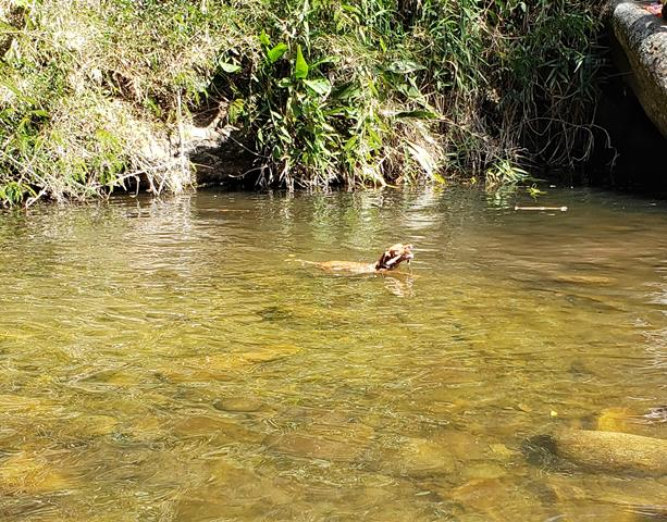 Cachorro curtindo a cachoeira da macumba