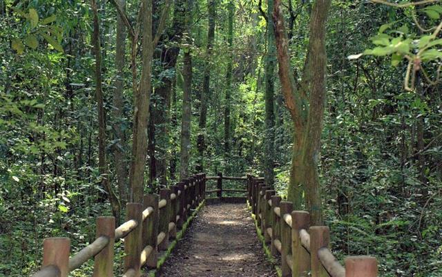 Parque nacional de Brasilia